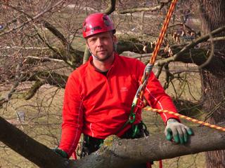 Klettergurt Für Baumpflege : Baumpflege metz worms baumfällarbeiten baumkletterer